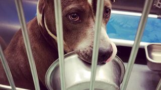 Shelter dog who loves his food bowl gets adopted after story goes viral