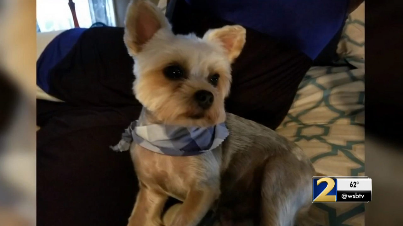 Yorkie owner shoots, kills pit bull after it mauls his dog