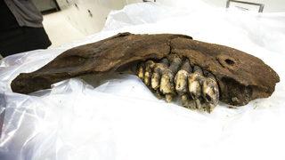 Teen finds prehistoric mastodon jawbone in Iowa