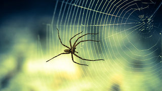Spider forces frightened woman out of van; vehicle sinks into North Georgia river