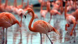 Flamingo at Illinois Zoo Euthanized after Being Hit by Rock