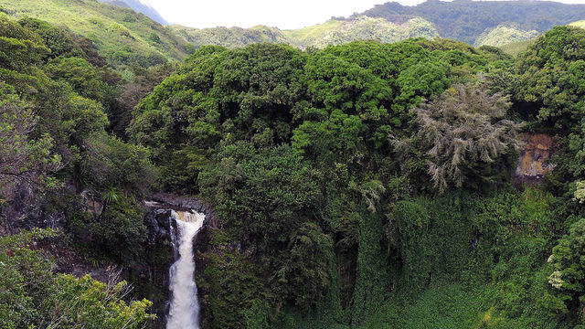Makawao Forest Reserve on Maui where Amanda Eller was found alive and well