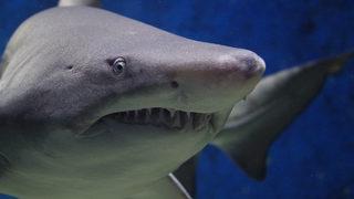 Man killed by shark in Maui