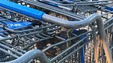 A Walmart shopping cart attendant was surprised to find a snake in a cart he retrieved from the parking lot.