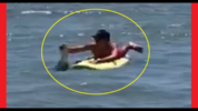 Video shows a man on a paddleboard removing an alligator from the ocean Saturday.