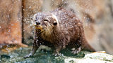 Tennessee Park Guests Throw Food Into Habitat, Otter Dies