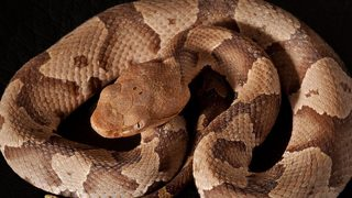 Venomous snake bites up 67 percent in Charlotte region from 2018
