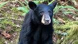 SEE: Black Bear Cub Killed Because People Kept Feeding It