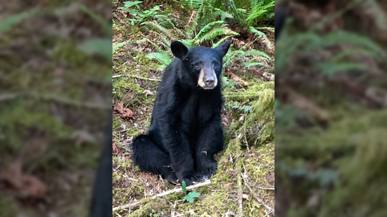 Bear cub killed because people wouldn't stop feeding it