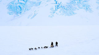 Stunning photo shows sled dogs traveling on water above melting Greenland sea ice