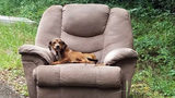 Abandoned Puppy Found on Mississippi Road, Hungry and Sitting in Armchair