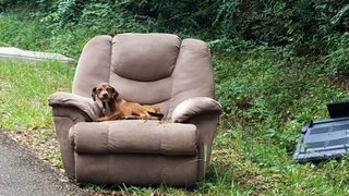 Puppy found abandoned on Mississippi road, hungry and sitting in armchair