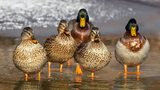 Dozens of ducks and geese were killed at a north Florida pond, police said.
