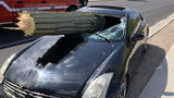 An Arizona driver suffered minor injuries after he crashed into a large saguaro cactus, which impaled his windshield, authorities said.