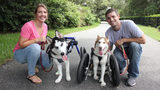 "Ayla Manzer, left, and Dakota Sillox pose with their adopted ""handicapable"" dog Maple, right, and foster dog, Dallas, left."