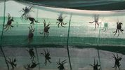 Crabs were attaching themselves to screens and were crawling through yards in a South Florida neighborhood.