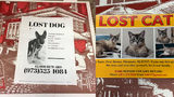 SEE: Pizza Boxes Being Used to Reunite Missing Pets with Owners