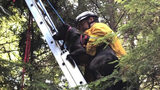 Firefighters with South Kitsap Fire and Rescue in Washington state helped rescue a dog that was stuck in a tree Friday.