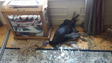 A burglary call turned out to be a turkey that had broken into a home in Utah.