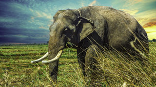 $48 million in illegal ivory from hundreds of elephants seized at border