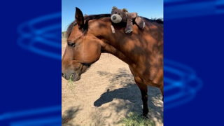Horse punched, 4 deputies hurt during brawl at county fair in California