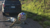 Montana Trooper Finds Roadkill Deer With 'Get Well Soon' Balloon Attached