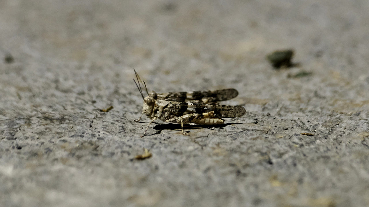 Grasshopper swarm likely showing up on Las Vegas weather
