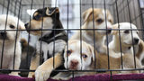 Puppy stolen minutes before adoption from Texas rescue center