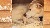 A dog about to meet his adoptive parents was stolen from a Houston animal rescue league center Saturday.