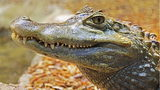 A South Carolina woman was bitten Monday night by an alligator as she was walking her dog.