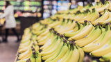 Bananas are among the most important food crops in the developing world, and millions depend on good banana harvests for a living. (File photo via Pixabay.com)
