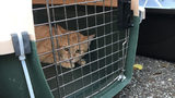Authorities in Pennsylvania have rescued 19 cats from a New Kensington home where an elderly woman's body was found last week.