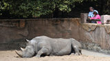 "Staff at a French zoo said they were ""outraged by the stupidity"" of visitors who wrote their names on the back of a rhino."
