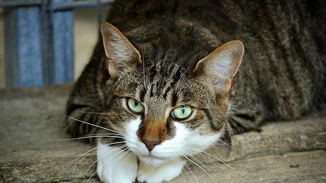 Full-figured feline looking for forever home in Philadelphia