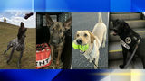 The Transportation Security Administration wants your help to determine its top dog in its Cutest K-9 contest in honor of National Dog Day on Monday.