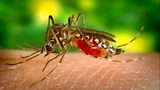 Some homeowners don't spray for mosquitoes because they are worried about killing bees, which pollinate flowers.