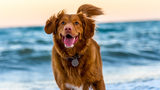 National Dog Day is celebrated across the U.S. and all over the world as International Dog Day.