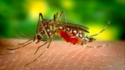 A Massachusetts woman has died of a mosquito-borne illness caused by Eastern Equine Encephalitis or EEE. Three more people have also contracted the virus in the state.