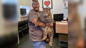 More than 3,000 adoption applications have come in for Mr. B, a 26-pound tabby cat, at Morris Animal Refuge.