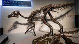 SEE: Skeleton of largest duck-billed dinosaur in Japan discovered