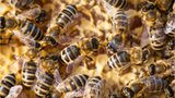 5 people, including 6-month-old child, stung by bees outside Arizona mall