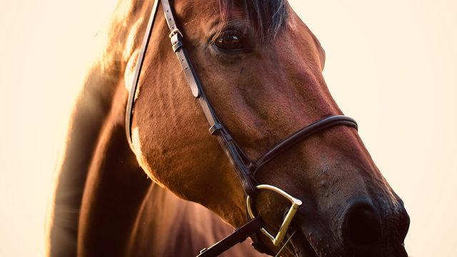 7 Year Old Kansas Boy Dies After Horse Accident Boston