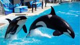 SeaWorld – What you need to know