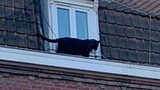 Escaped black panther prowls rooftops in French town