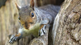FILE PHOTO: A woman said a squirrel asked for help for its injured baby, going so far as to pull on the woman's pant leg.