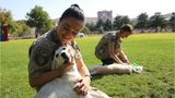 Air Force Needs Help in Finding New Homes for Retired Military Dogs