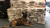 Johnstown Police Department officials seized 60 pounds of marijuana with the help of K-9 Thor.