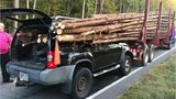 Driver in Georgia miraculously survives crash with logging truck