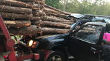 A driver from a vehicle was pulled to safety after he collided with a logging truck Friday morning.
