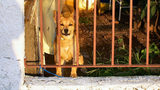 A dog looks out wistfully from inside a fenced yard. The U.S. House has passed a bill making animal abuse a federal felony with some exemptions for legal sports hunting, pesticide use and some research.